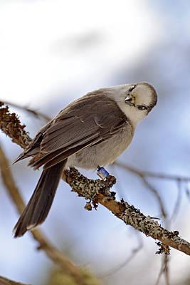 Photograph - The Cutest Birdy by Joshua McCullough