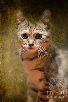 The Cutest Kitty Art Print by Klara Acel