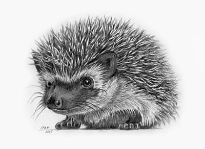 Hedgehog Drawings Fine Art America