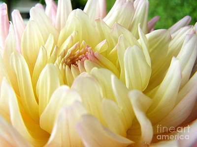Art Print featuring the photograph Yellow Dahlia by Margie Amberge