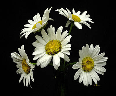 Photograph - The Daisy Five  by James C Thomas
