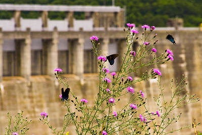 Photograph - The Dam Butterflies by Melinda Ledsome