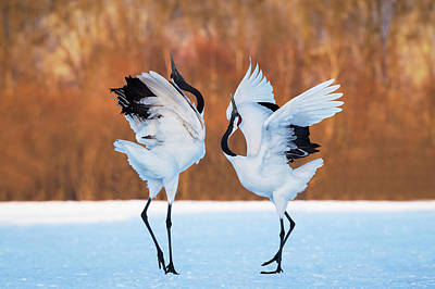 Crane Photograph - The Dance Of Love by C. Mei