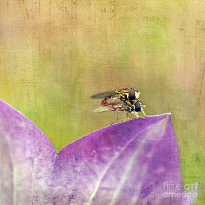 Bellflower Photograph - The Dance Of The Hoverfly by Cindi Ressler