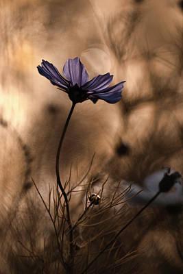 Macro Flower Photograph - The Dancing Queen by Fabien Bravin