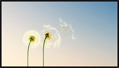 Digital Art - The Dandelions... by Tim Fillingim