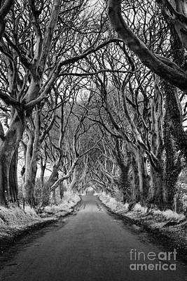 Ballymoney Photograph - The Dark Hedges Beech Tree Avenue In Winter County Antrim Northern Ireland by Joe Fox