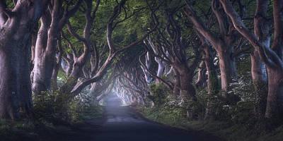 Ireland Wall Art - Photograph - The Dark Hedges by Daniel Fleischhacker