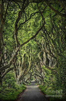 Corridor Photograph - The Dark Hedges by Evelina Kremsdorf