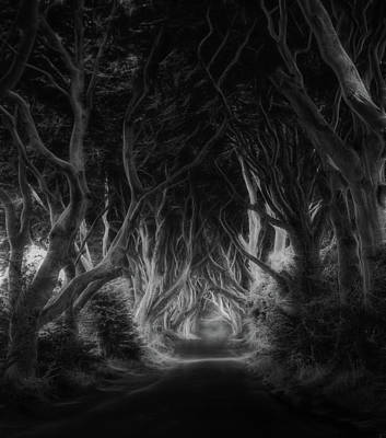Ireland Wall Art - Photograph - The Dark Hedges by Saskia Dingemans