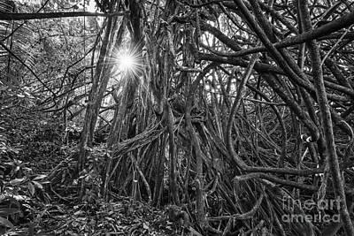 Giant Fern Photograph - The Dark Jungle by Jamie Pham