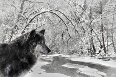 The Dark Wolf Art Print by Lori Deiter