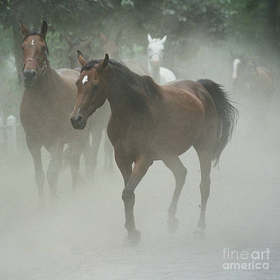 Equine Art Photograph - The Daughters Of A Desert by Angel  Tarantella