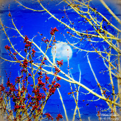 Photograph - The Day The Moon Stayed Out All Day by Bobbee Rickard