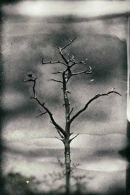 Photograph - The Dead by Nicholas Evans