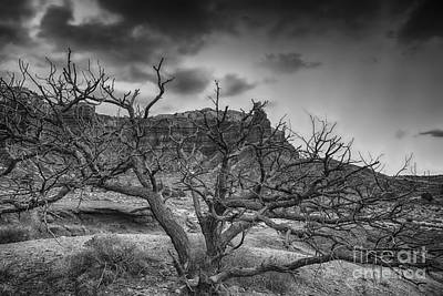 Pinion Photograph - The Dead Pinion Tree Hdr Bw by Mitch Johanson