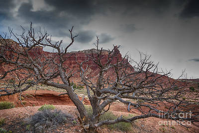 Pinion Photograph - The Dead Pinion Tree Hdr by Mitch Johanson