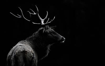 Deer Photograph - The Deer Soul by Massimo Mei