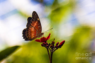 Photograph - The Delic View Of The Butterfly by Rene Triay Photography