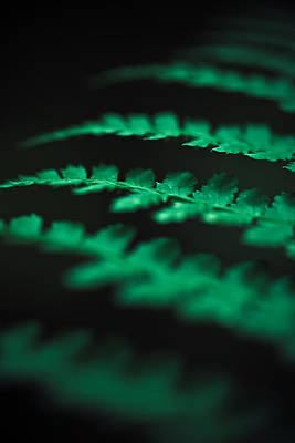 Canaan Valley Photograph - The Delicate Nature Of Ferns by Shane Holsclaw