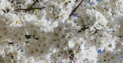 Photograph - The Delicate Nature Of Spring 1 by Diane Alexander