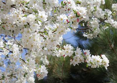 Photograph - The Delicate Nature Of Spring 2 by Diane Alexander