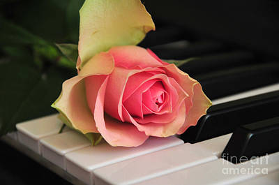 Piano Photograph - The Delicate Rose by Randi Grace Nilsberg