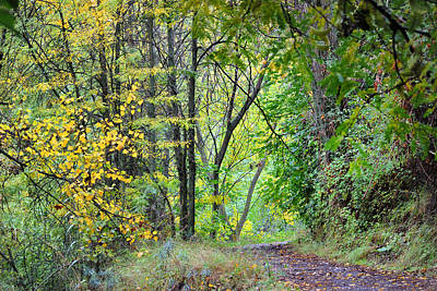 The Dense Forest Art Print by Guido Montanes Castillo