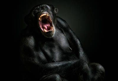 Chimpanzee Photograph - The Depths Of Despair by Pedro Jarque