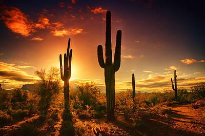 Photograph - The Desert Awakens  by Saija  Lehtonen
