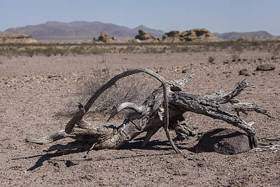 Photograph - The Desert Floor by Amber Kresge
