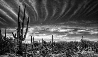 The Desert In Black And White Art Print