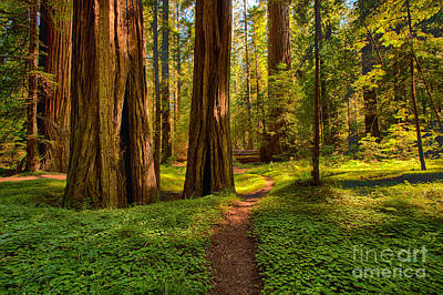 Of Artist Photograph - The Destination - California Redwoods I by Dan Carmichael