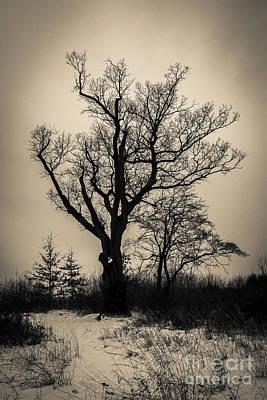 The Devil's Tree Art Print by Jeffrey Miklush