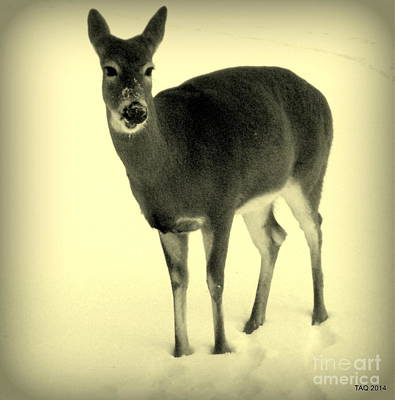 Photograph - The Doe In Winter by Tami Quigley