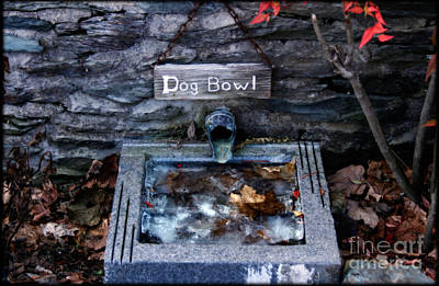 Rural America Photograph - The Dog Bowl  by Steven Digman