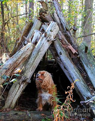 Photograph - The Dog In The Teepee by Davandra Cribbie