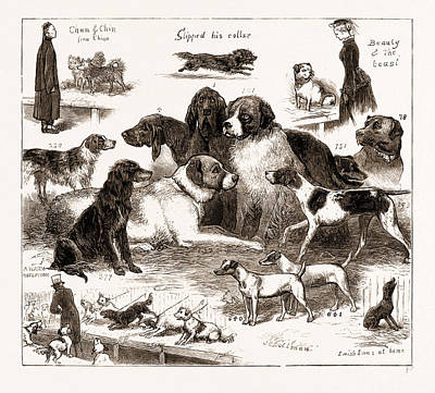 The Dog Show At The Crystal Palace, London Art Print