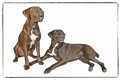 The Dogs Rocco And Tex Original by Harold Bonacquist