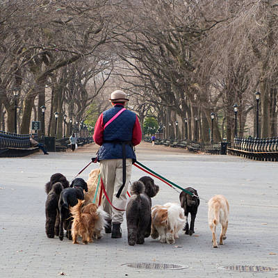 Photograph - The Dogwalker by Cornelis Verwaal