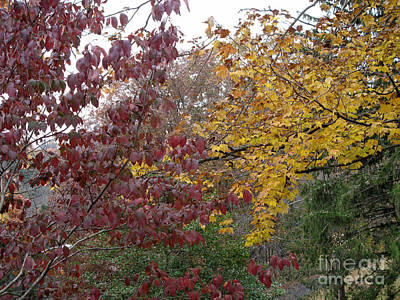 Photograph - The Dogwood And The Maple Leaves by Sandy McIntire
