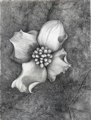 The Dogwood Art Print