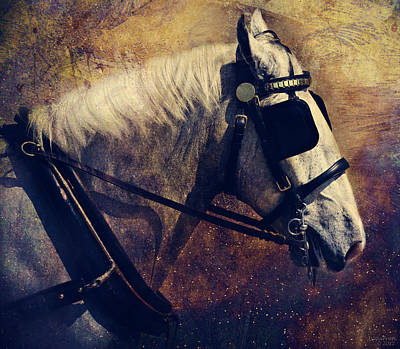 Glass Eyed Pony Photograph - The Draft by Lyndsey Warren