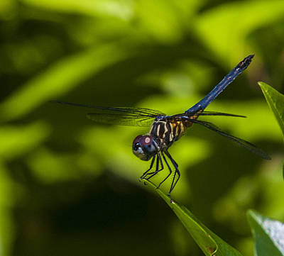 Photograph - The Dragon Fly by Terry Cosgrave