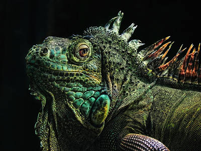 Iguana Photograph - The Dragon by Joachim G Pinkawa