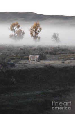 Photograph - The Dream Cow Of Mourning by Brian Boyle