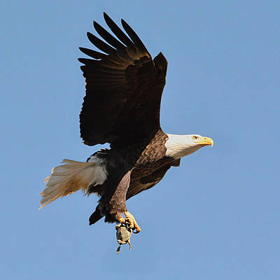 Photograph - The Eagle And The Turtle by Jai Johnson