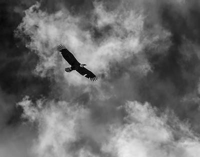 Eagle In Flight Photograph - The Eagle Bw by Ernie Echols