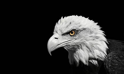 Photograph - The Eagle by Erin Tucker