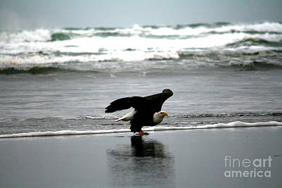 Photograph - The Eagle Has Landed by Deena Otterstetter